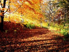 *Autumn light*    by <b>ka9894</b> ( a Panoramio image )