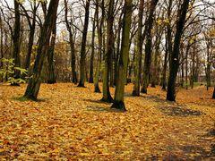 Jesienny Park by <b>piotr.</b> ( a Panoramio image )