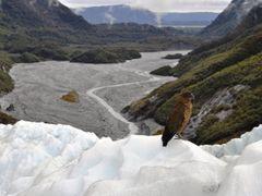 Franz Josef Glacier by <b>CarolineSST</b> ( a Panoramio image )
