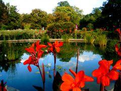 End of summer - Botanic Garden (Iasi, Romania) by <b>Argenna</b> ( a Panoramio image )