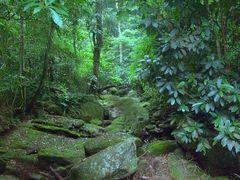 subida da pela antiga cachoeira  reserva ambiental do Camorim by <b>Paula Lirio</b> ( a Panoramio image )