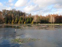 Heviz, termalno jezero by <b>panciceva</b> ( a Panoramio image )
