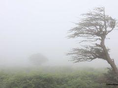 Dances with wind by <b>Daurbino</b> ( a Panoramio image )