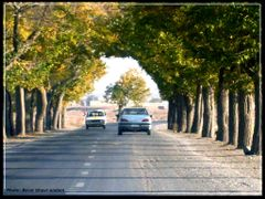 ... . Tunnel of trees on the road (Title by Kalhor) . ... by <b>?Berat Qevi Endam</b> ( a Panoramio image )