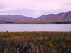 Lake Tekapo, NZ by <b>AnjaTilo</b> ( a Panoramio image )