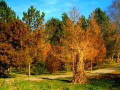 Autumn impressions(dedicated to Teodor Cardei) - Iasi , Botanic  by <b>Argenna</b> ( a Panoramio image )