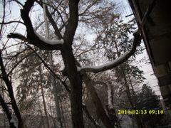 дерево by <b>Rafa Hat</b> ( a Panoramio image )