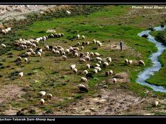 Iran-Quchan-Tabarak Dam-Sheep Herd by <b>?Berat Qevi Endam</b> ( a Panoramio image )