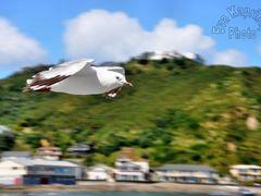 Freedom by <b>Eva Kaprinay</b> ( a Panoramio image )