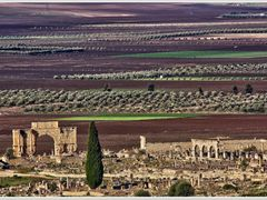 Ancient town of Volubilis by <b>_MM_</b> ( a Panoramio image )