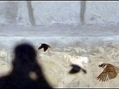 Hot pursuit :D by <b>Hamid Moghadam</b> ( a Panoramio image )