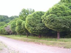 Arboles redondos by <b>agroquin</b> ( a Panoramio image )