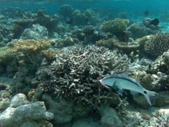 Maldives - Reef by <b>famferrando</b> ( a Panoramio image )