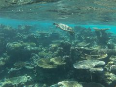 Maldives - Reef by <b>famferrando</b> ( a Panoramio image )
