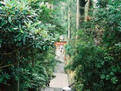 The stairs to Hakone Shrine by <b>j. adamson</b> ( a Panoramio image )