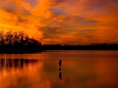 Golden Sunset and Silhouette of Heron 2 - Jacobson Park (Lexingt by <b>Kalin Ranchev</b> ( a Panoramio image )