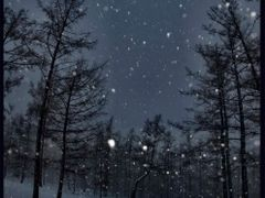snow in night forest by Erdenet by <b>Alexandre Angeluz</b> ( a Panoramio image )