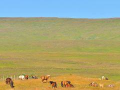 Icelandic horse © Sunpixx by <b>Sunpixx</b> ( a Panoramio image )