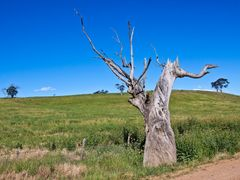 Tree trunk after 100 km on C2K by <b>Steve Bennett</b> ( a Panoramio image )