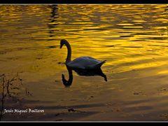 *Banado En Oro by <b>Jesus Miguel Balleros</b> ( a Panoramio image )