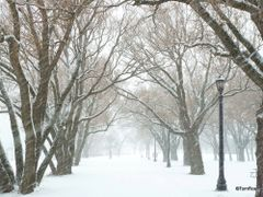 Snowy Sunnyside Park in December (full effect on full screen - G by <b>Tomros</b> ( a Panoramio image )