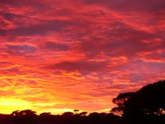 Sunrise, 40 kms before Eucla by <b>ricky kaak</b> ( a Panoramio image )
