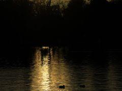 Solitario.Lonely. by <b>luciano passos cruz [<?>]</b> ( a Panoramio image )