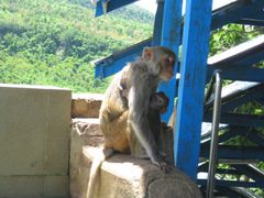 At the staircase to Mt. Popa by <b>Anuar T</b> ( a Panoramio image )