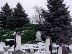 """Penguins on a Waterfall"" by Yolanda Vandergaast - Odette Sculpt by <b>Irene Kravchuk</b> ( a Panoramio image )"