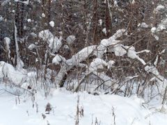 Зимний лес by <b>yuryi</b> ( a Panoramio image )