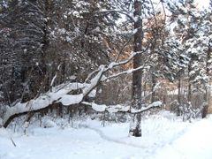 Зимнее утро by <b>yuryi</b> ( a Panoramio image )