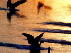 Landing - on Golden Pond by <b>Tomros</b> ( a Panoramio image )