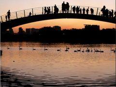 A ponte by <b>Joilton Elias</b> ( a Panoramio image )