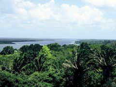 Belize : Lamanai : view from the top by <b>Dominique Hazard</b> ( a Panoramio image )