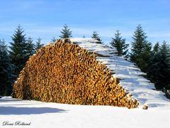 Montagne de bois by <b>? Dominique Rolland</b> ( a Panoramio image )