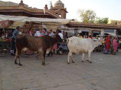 la vida en las calles de Jodhpur by <b>AnaMariaOss</b> ( a Panoramio image )