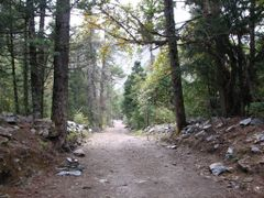Himalayan forest by <b>volnat</b> ( a Panoramio image )