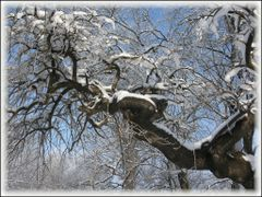 "Pom ""chinuit"" in parcul vechi al Sloboziei. by <b>Dragomir Dan</b> ( a Panoramio image )"