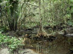 Jungle Trail, Sabang, Palawan, Philippines 2007 by <b>Ralf & Lhyn</b> ( a Panoramio image )