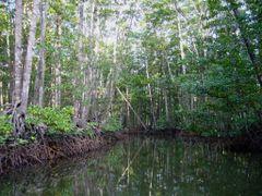 Mangrove Tour, Sabang, Palawan, Philippines 2007 by <b>Ralf & Lhyn</b> ( a Panoramio image )
