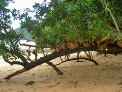 Part of the Monkey Trail, Sabang, Palawan, Philippines 2007 by <b>Ralf & Lhyn</b> ( a Panoramio image )