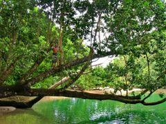 Big Tree at Underground River, Sabang, Palawan, Philippines 2007 by <b>Ralf & Lhyn</b> ( a Panoramio image )