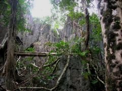 Monkey Trail to Underground River, Sabang, Palawan, Philippines  by <b>Ralf & Lhyn</b> ( a Panoramio image )
