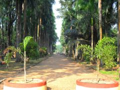 INDIAN BOTANIC GARDEN,,, largest and oldest (yr 1787) in South-E by <b>B.Pramanik</b> ( a Panoramio image )