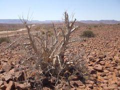 Landschaft an der C43 irgendwo zwischen Sesfontein und Palm- wag by <b>Wolfgang Hanko</b> ( a Panoramio image )
