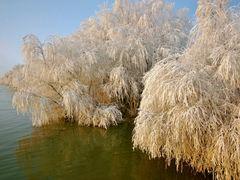 "The nature robe to ""Christening frost"" 06-Jan-2011 - Mantia natu by <b>Ioan Cepaliga</b> ( a Panoramio image )"