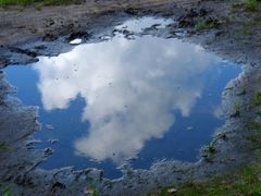 Poodle in the puddle by <b>Maciejk</b> ( a Panoramio image )