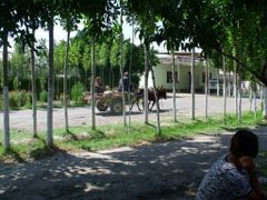 Поселок Халкобад. Иш-412. Иш- ишачок, 4 - ноги, 1 -  хвост, 2 -  by <b>рифкат</b> ( a Panoramio image )