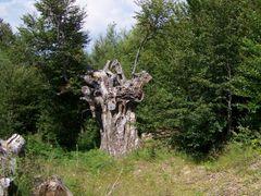 Stump by <b>Rade57</b> ( a Panoramio image )