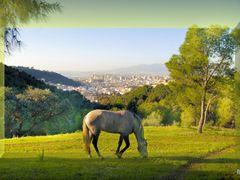 campo del monte Victoria by <b>ramtto</b> ( a Panoramio image )
